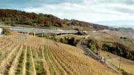 golden harvest in famous vineyard Switzerland video