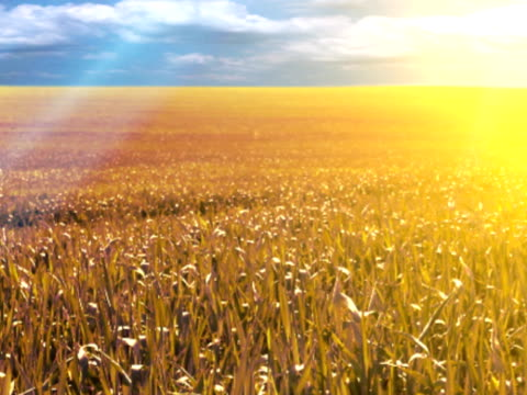 Golden summer crops and incredible light rays video