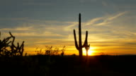 Golden sun setting behind large cactus silhouette in western America video