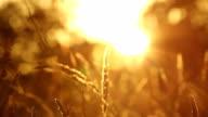 Golden Sunset video