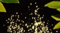 HD SLOW MOTION: Golden Water Drops Sparkling In Sunlight video