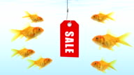 Goldfishes looking for sale video