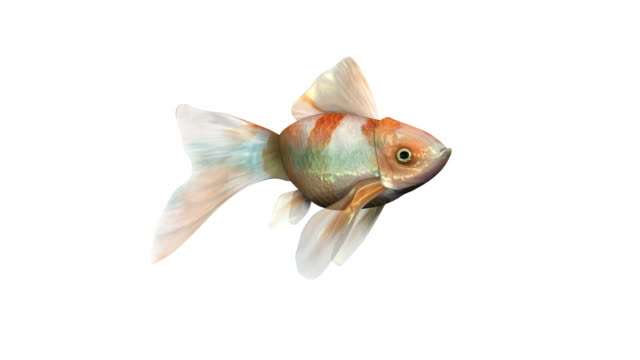 Goldfishes, Teacher and Class (2 loops) video