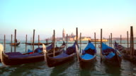 Gondolas at Saint Mark's Square in Venice video