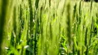 Good Future Harvest video