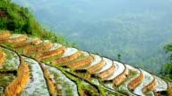 Gorgeous farm fields, rice paddy terraces, Sapa, Vietnam video