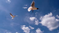 Graceful Seagull Soar on Clouds Background video