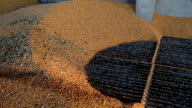 Grain Being Loaded into the Silo video