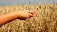 Grain on hand video