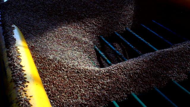 Grain sieving video
