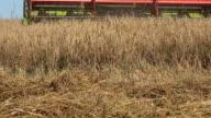 Grain thresher combine machine harvesting wheat rye barley ears in summer agriculture field. FullHD video