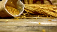 Grains of golden wheat in a sack spilling on the old wooden background, slow motion video