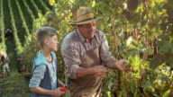 DS Grandpa teaching grandson how to hand harvest grapes video