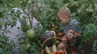 Grandson and Grandfather Picking Tomatoes video