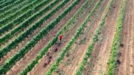 Grape Harvest video