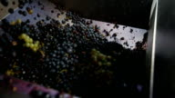 Grapes Harvesting in a Vineyard: pressing machine video