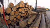 TIME-LAPSE Grapple crane sorting logs at sawmill video