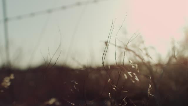 Gras in the sunlight video