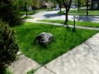 Grass 1 - NTSC video