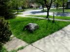 Grass 1 - PAL video