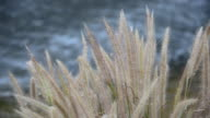 Grass against the wind near waterfall video