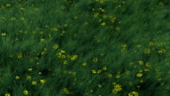 Grass and Flowers Blowing in Wind video