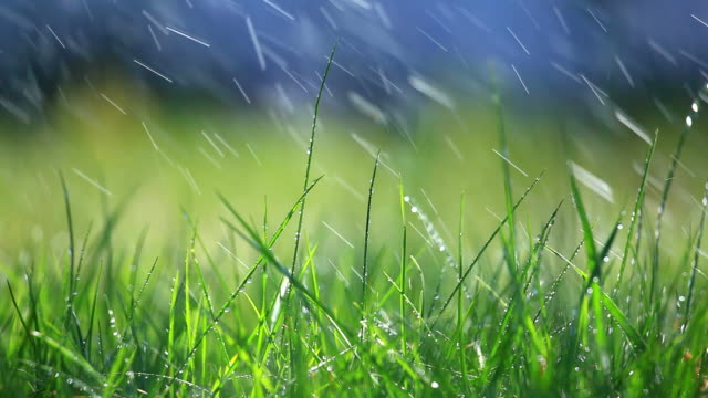 Grass and rain - selective focus video