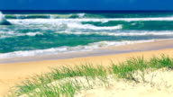 Grass and sandy beach on sunny day on Sunshine Coast video