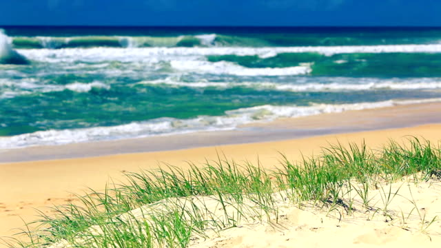 Grass and sandy beach on sunny day on Sunshine Coast video