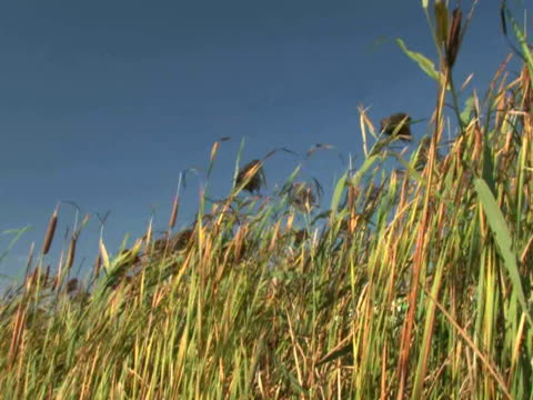 Grass and Sky 2 video