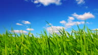 Grass and sky video