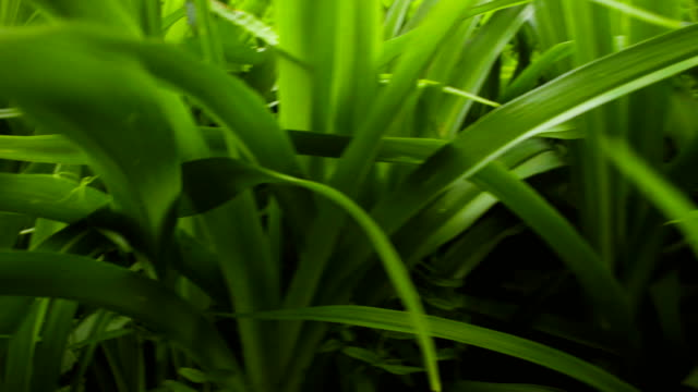 Grass at summer day video