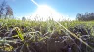 HD TIME-LAPSE: Grass Awakening In The Spring video