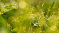 Grass background. video