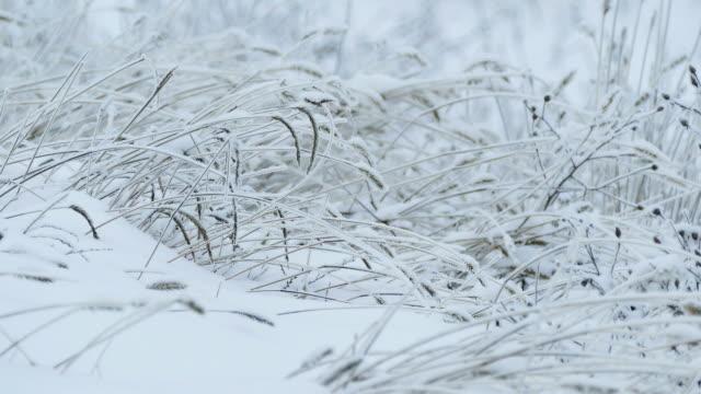 grass beautiful ice snow frozen winter pretty video