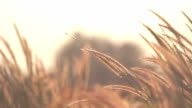 Grass beside the road background video