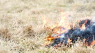 Grass burning in the field. Fire spreads after the arson. video