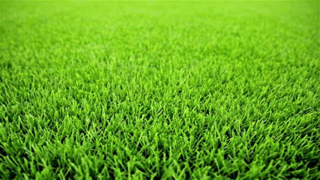 Grass field. Close-up, horizontal slider shot video