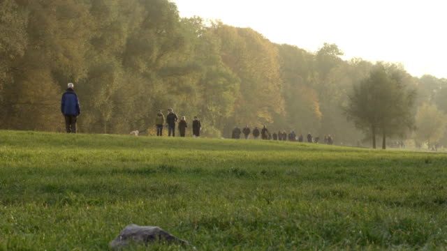 Grass field. People walking on the background next to the forest video