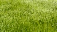 grass field video