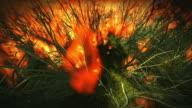 Grass fire video
