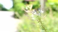 Grass flower blooming in a summer field video