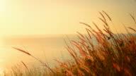 Grass flower on tropical sunset beach video