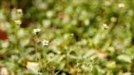 Grass flower with soft green bokeh video
