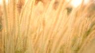 Grass flowers background video