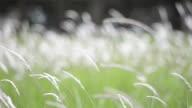 Grass flowers video