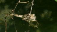 grass frog video