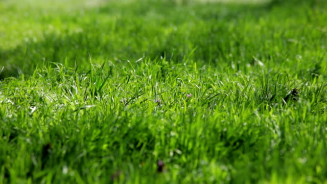 grass growing in spring video