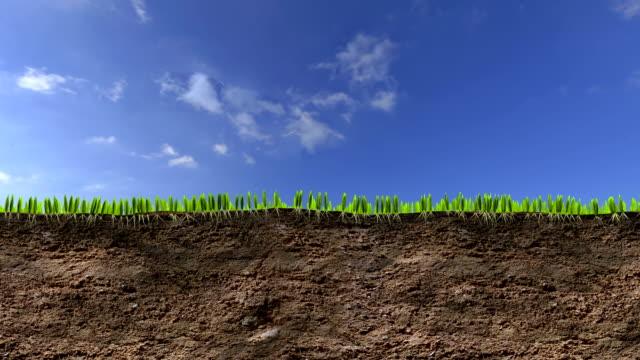 grass growing video