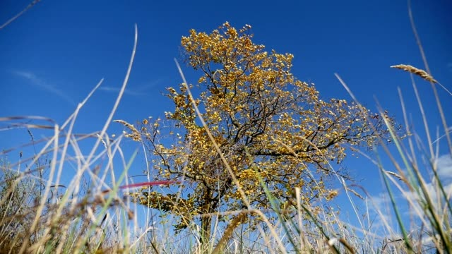 grass in field in background lonely in autumn on background tree of blue sky nature video